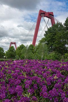 Willemsbrug Rotterdam van Rdam Foto Rotterdam