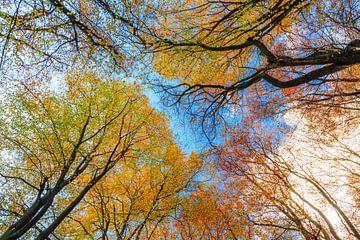 Kleurrijke herfst in het Speulderbos von Dennis van de Water