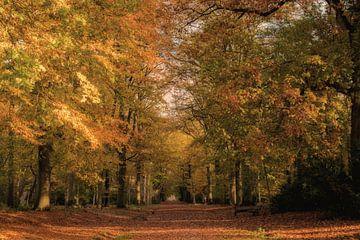 Herbstliche Farben von Marianne van der Westen