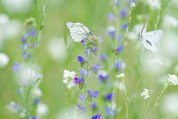 Vlinders in een bloemenveld. Groot geaderd witje. van Marianne Jonkman