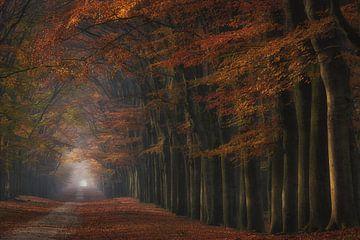 Magisch bos van Arjen Noord
