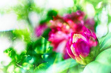 Rhododendron von Erik Reijnders