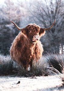 Hiver écossais des Highlands