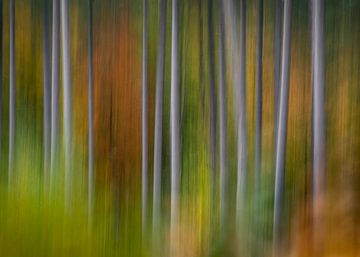 Autumnvibes