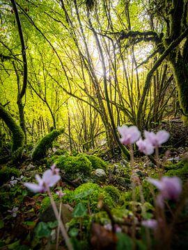 Die wilden Wälder von Zagori, Griechenland von Teun Janssen