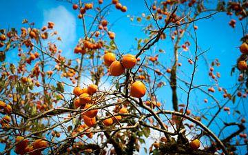 Obstbaum voller Khaki von Hester Liem