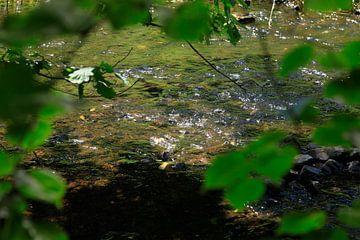Water van Thomas Jäger