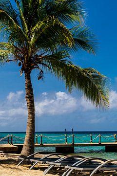 Palme am Strand von Kokomo Beach von Paul van Putten