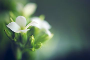 bloemetjes van Kristof Ven
