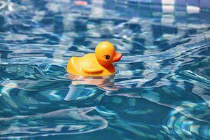 Badeend in zwembad van