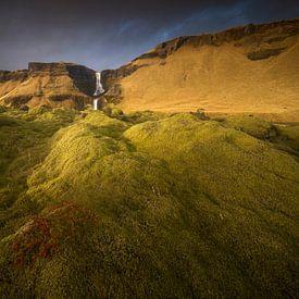 Het mosveld, IJsland van Sven Broeckx