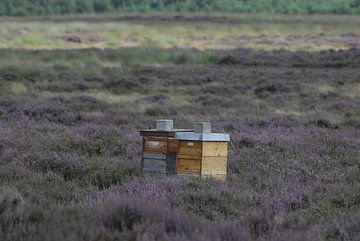 Bijenkorven van