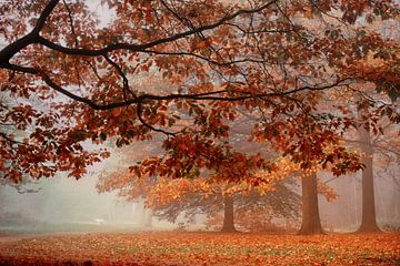 Foggy Dreamforest van Saskia Dingemans