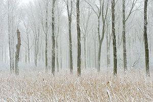 Meerbusch, Ilvericher Altrheinschlinge im Winter