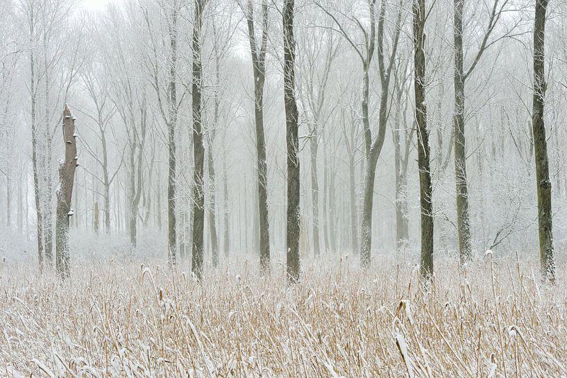 Snow covered swamp forest at Meerbusch,  Lower Rhine Region van wunderbare Erde