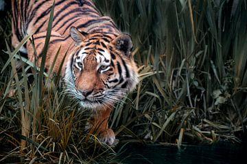 Tiger auf der Jagd von Joachim G. Pinkawa