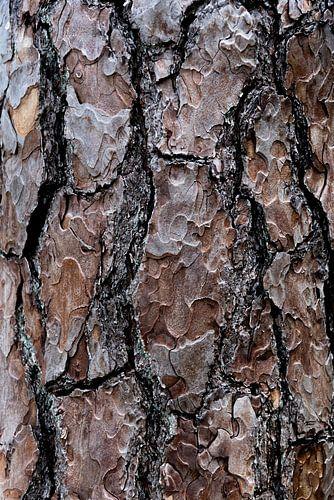 Close-up van schors van de  Grove Den