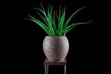 Plant low key stilleven von Anouk IJpelaar