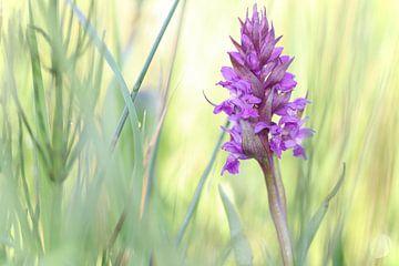 paarse orchidee van Marjo Snellenburg