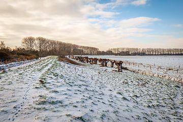 Winter landschap in een Nederlandse polder