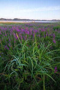 Verticaal landschapsopname Lentevreugd Wassenaar