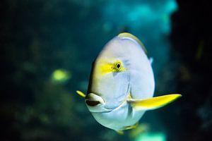 Tropical fish van