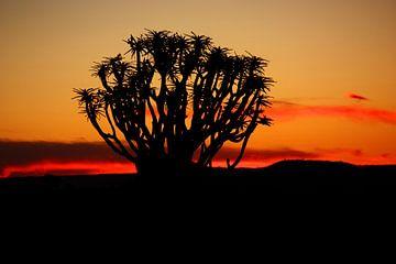NAMIBIA ... Quiver Tree Sunset van Meleah Fotografie
