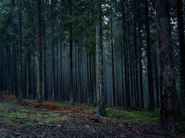 Mist en nevel tussen de bomen. von Ineke Mighorst