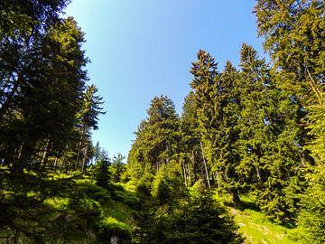 Sonniges Wetter im Harz von Tobi Bury