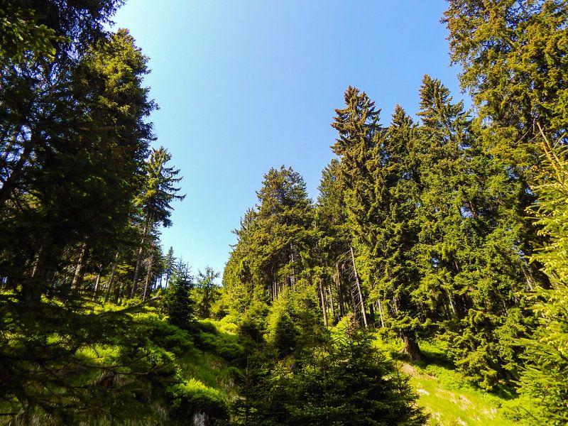Sonniges Wetter im Harz van Tobi Bury