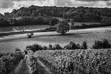Weingut am Dodemanweg (Stokhem) von Rob Boon