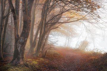 Bergpfad nach Frahan bei Rochehaut von Peschen Photography