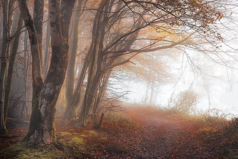 Bergpad naar Frahan bij Rochehaut van Peschen Photography