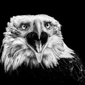 Amerikaanse Arend -vooraanzicht - close-up - Zwart Wit van Vincent Willems