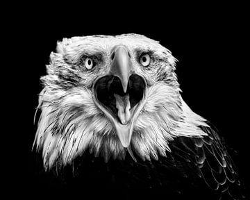 Amerikaanse Arend -vooraanzicht - close-up - Zwart Wit van