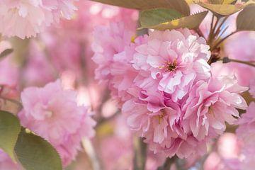Roze bloesem tegen roze achtergrond van Arja Schrijver Fotografie