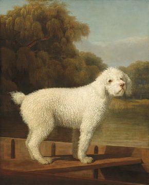 Weißer Pudel im Stechkahn, George Stubbs