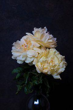 pioenroos met donkere achtergrond van Anne Marie Hoogendijk