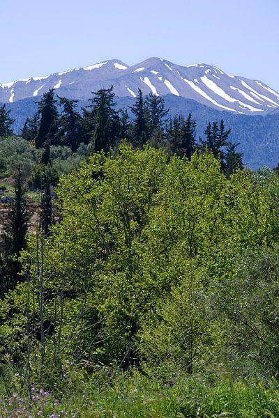 Bos en berg van Miranda van Hulst