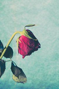 Treurende kop roos van Lavieren Photography