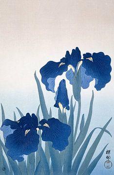 Irises, Ohara Koson