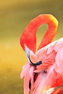 LP 70485490 Caribische flamingo van BeeldigBeeld Food & Lifestyle