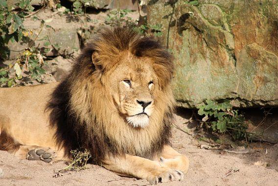 Leeuw van michael nigten