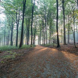 Zon warmt het bos op van Sven Scraeyen