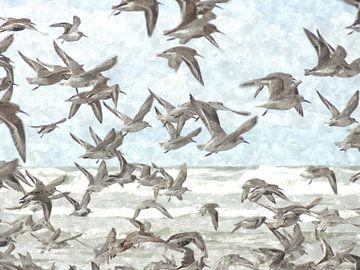 A Flock of Seagulls von Floris De Mol