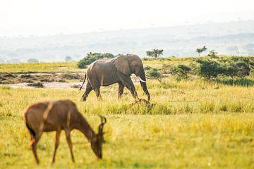 Olifant / Afrikaans kleurrijk landschap / Natuurfotografie / Oeganda van Jikke Patist