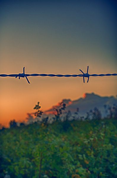 Freedom? van Jeroen Hagedoorn