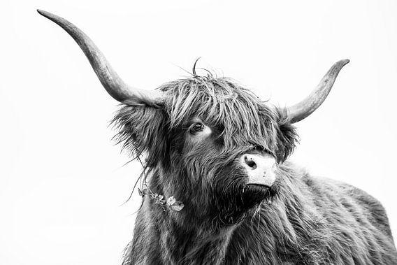 Schotse Hooglander in zwart-wit