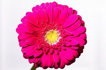 Gewoon een bloem van Nancy Bogaert