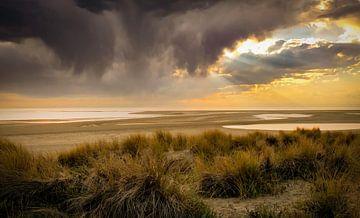 Strand und Dünen Maasvlakte von Marjolein van Middelkoop